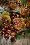 Autumn chestnuts on table. Autumn chestnuts with green leaves on table Royalty Free Stock Images