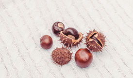 Autumn chestnuts on the white background knitted fabric Royalty Free Stock Photography