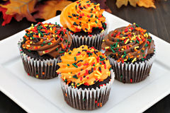 Autumn chocolate cupcakes with orange and chocolate frosting and Royalty Free Stock Photo