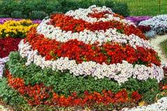 Autumn Chrysanthemum Exhibition a Kiev, Ucraina, 2016 Fotografia Stock