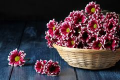 autumn chrysanthemum flowers in a basket on a dark blue wooden table stock photo