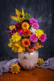 Autumn chrysanthemum flowers Stock Images