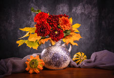 Autumn chrysanthemum flowers Stock Image