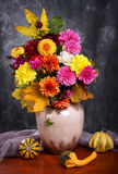 Autumn chrysanthemum flowers Stock Photos