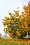 Autumn city Stock Images