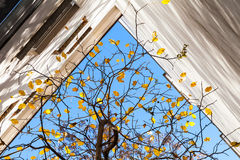 Autumn in the city, abstract photo background Stock Photography