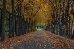 Yellow Alley in the city royalty free stock photos