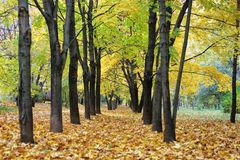 Autumn in the city, fall of the leaves, yellow leaf, Royalty Free Stock Photos