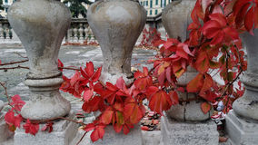 Autumn in the city Stock Image