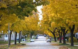 Autumn in the City, Homes, Houses, Neighborhood. Residential street with the trees turning fall colors, giving the scene a park-like feel. Houses and homes can Royalty Free Stock Photography