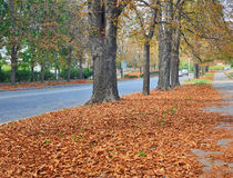 Autumn in City Stock Photography