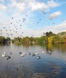 Autumn city landscape on the lake. Flying birds. Royalty Free Stock Photo