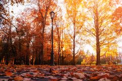 Autumn city landscape. Autumn trees in sunny fall park lit by sunshine and fallen maple leaves on the foreground. Autumn city park scene stock images