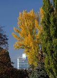 Autumn in the city. A modern building between trees with yellow leaves against a blue sky stock images