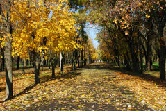 Autumn city park Stock Photo