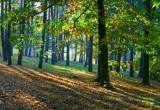 Autumn city park Royalty Free Stock Image