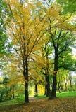 Autumn city park Stock Photography