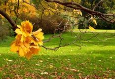 Autumn in city park. Stock Photos