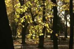 Autumn city park and beautiful foliage of trees. stock photography