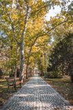 Autumn in city park, beautiful golden trees, a wooden bench and a path. stock photos