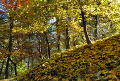 Autumn city park. Royalty Free Stock Images