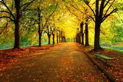 Autumn in city park Royalty Free Stock Photo
