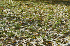 Autumn in city park. Fallen leaves on the grass on a sunny day in the autumn city park Royalty Free Stock Photography