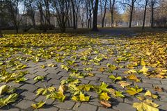 Autumn in the city park. Fallen leaves of maple on the ground. Dnipro. Ukraine Royalty Free Stock Photography