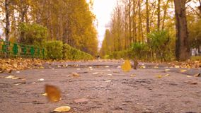 Autumn city park and falling leaves blowing wing on path. Seasonal leaves fall