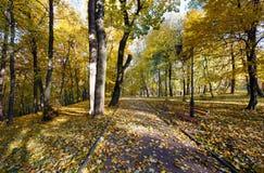 Autumn city park. Stock Images