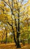 Autumn city park. Stock Photography