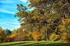 Autumn city Park with green grass and bright trees. Autumn Park with green grass and bright trees. Beautiful natural landscape stock images