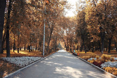 Autumn in the city park Royalty Free Stock Photos
