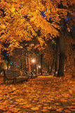 Autumn city park at night Royalty Free Stock Photos