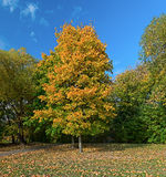 Autumn city Park. Royalty Free Stock Photography