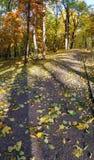 Autumn city park. Stock Photo