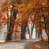 Autumn city park Stock Photos