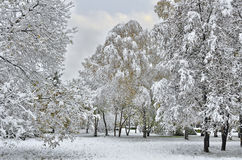 Autumn city park under first snow. Royalty Free Stock Image