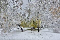 Autumn city park under first snow. Stock Image