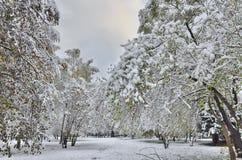 Autumn city park under first snow. Stock Photography