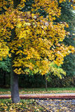 Autumn city park. With yellow leaves under trees Royalty Free Stock Photo