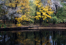 Autumn city park. With yellow leaves under trees stock image