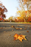 Autumn city park with yellow leaves under trees Royalty Free Stock Photos