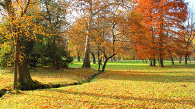 Autumn city park with yellow leaves under trees Royalty Free Stock Photo