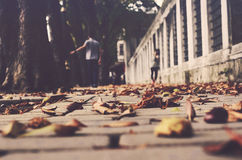 Autumn in the city. Selective focus Stock Photography