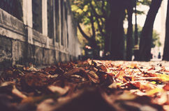 Autumn in the city Royalty Free Stock Image