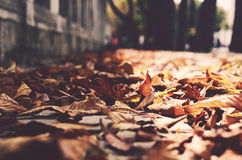Autumn in the city Royalty Free Stock Images