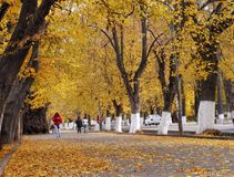 Autumn city street Royalty Free Stock Photo
