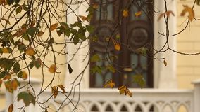 Autumn in the city, wonderful view of yellow tree leaves in front of window. Stock footage stock video