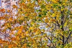 Autumn in the city. Yellow-green art background Royalty Free Stock Photo